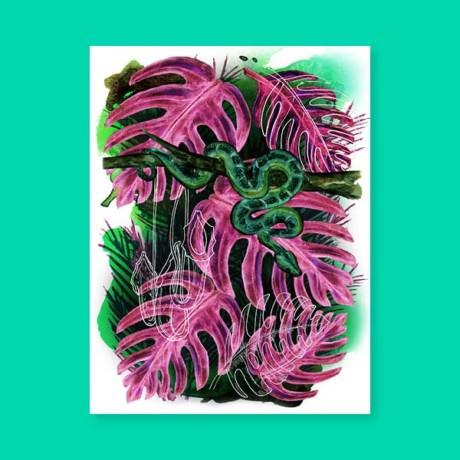 Jungles – Le boa
